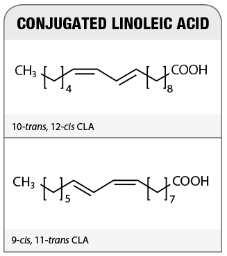 CLA chemical structures, CLA isomers to support Fat loss